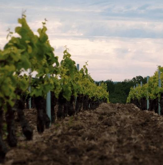 Profitez de votre séjour à l'hôtel Akena Nantes Aéroport pour découvrir le vignoble nantais.